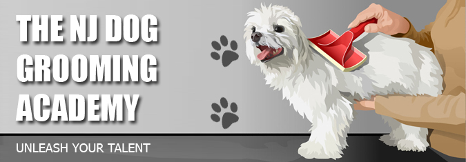 the new jersey dog grooming academy provides real world training for ...